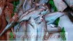 Livraison de poisson frais à Antananarivo Madagascar